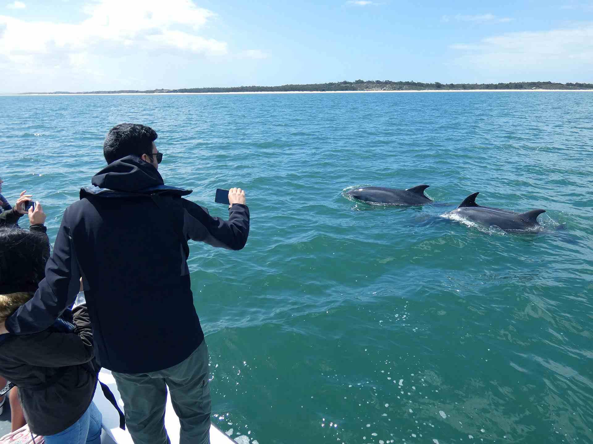 Sesimbra Dolphin Boat Tours
