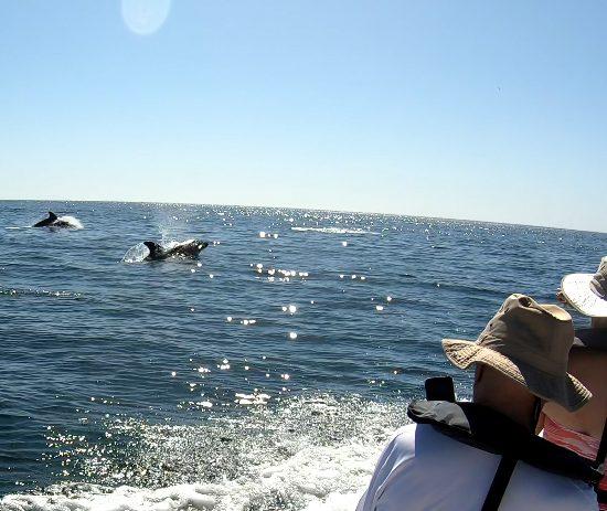 coastine boat tour